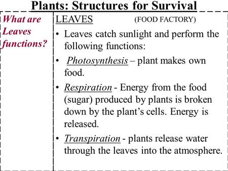 Plants: Structures for Survival LEAVES Leaves catch sunlight and perform the following functions: Photosynthesis – plant makes own food. Respiration -