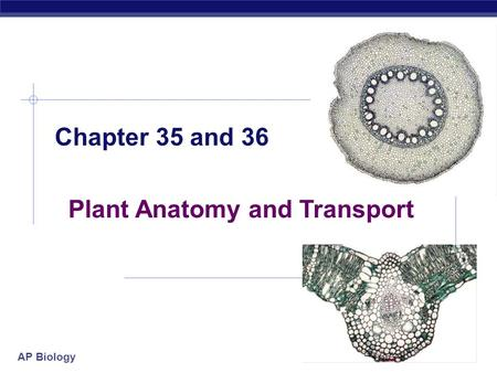 AP Biology 2005-2006 Chapter 35 and 36 Plant Anatomy and Transport.