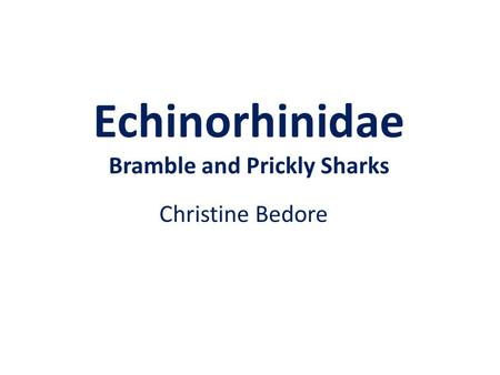 Echinorhinidae Bramble and Prickly Sharks Christine Bedore.