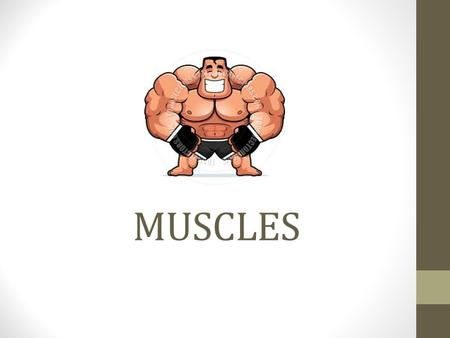 MUSCLES. 3 main categories of muscles : https://www.youtube.com/watch?v=C6u0u_59UDc Smooth- Another name is visceral muscle Involuntary muscles- have.