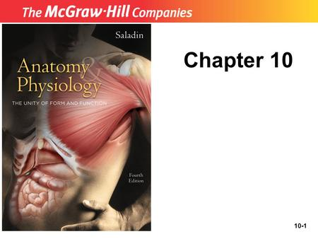 10-1 Chapter 10. 10-2 The Muscular System Structural and functional organization of muscles Muscles of the head and neck Muscles of the trunk Muscles.