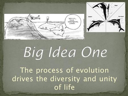 the process of evolution drives the Hank guides us through the process of natural selection, the key mechanism of evolution crash course biology is now available on dvd .