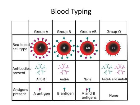 Blood Typing. What is the use of blood typing? Each person's blood is different due to the presence of antigens on the surface of red blood cells. Before.