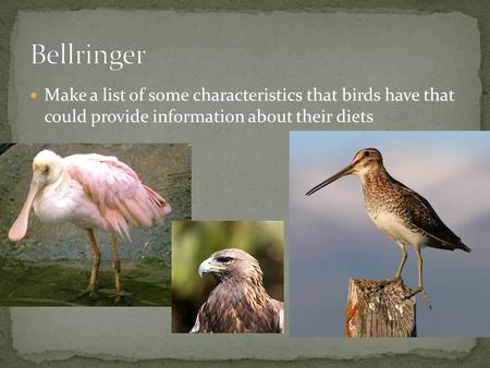 Make a list of some characteristics that birds have that could provide information about their diets.