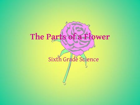 The Parts of a Flower Sixth Grade Science. The Parts of a Flower A flower is made up of rings The outermost ring is made of SEPAL The next ring inside.