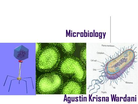 Microbiology Agustin Krisna Wardani. What is microbiology? Study of microscopic (living ) things  microorganism.
