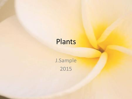 Plants J.Sample 2015. Review Photosynthesis: The process that plants use to make food using energy from the sun. Requires – Sunlight – Water – Carbon.