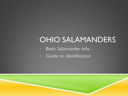 OHIO SALAMANDERS Basic Salamander Info. Guide to identification.