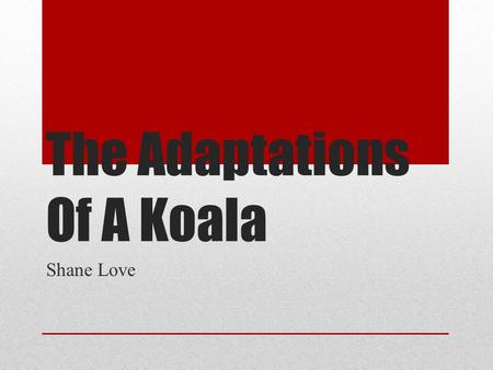 The Adaptations Of A Koala Shane Love. Body Stucture Their body is fit to squeeze into small tree spots. YYYEEEAAAAHHHH!!!! !