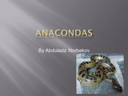 By Abdulaziz Norbekov. Do you have any clue what an Anaconda is? Well, if you read this you'll know everything about an Anaconda! Did you know that Anacondas.