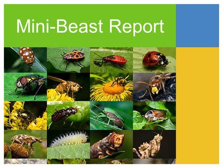 Mini-Beast Report. Location classificlassification What does it do how does it move description how do bees help us what does it eat our responsibilities.