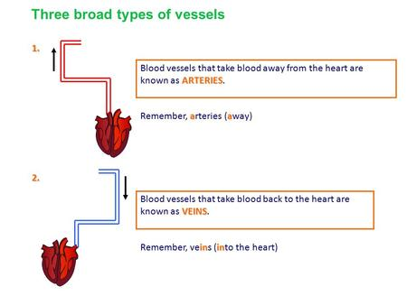 1. ARTERIES Blood vessels that take blood away from the heart are known as ARTERIES. 2. VEINS Blood vessels that take blood back to the heart are known.