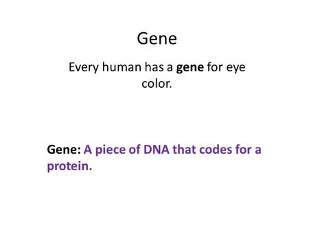 Gene Every human has a gene for eye color. Gene: A piece of DNA that codes for a protein.