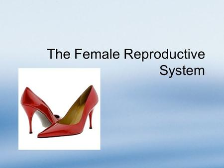 The Female Reproductive System. Overview The female reproductive system produces only a limited number of gametes Most structures are located inside the.