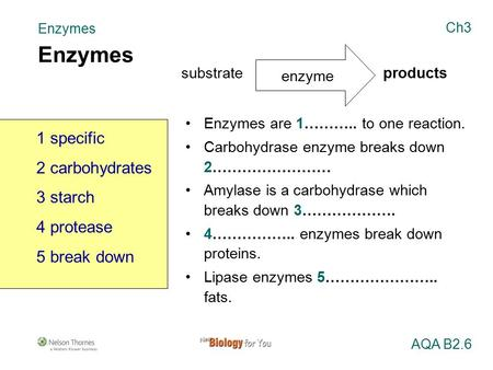 Enzymes are 1……….. to one reaction. Carbohydrase enzyme breaks down 2…………………… Amylase is a carbohydrase which breaks down 3………………. 4…………….. enzymes break.