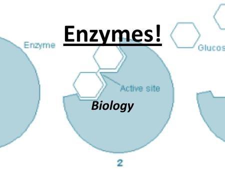 Enzymes! Biology. Enzymes: Page 42 An enzyme is a protein that functions as a catalyst to speed up a chemical reaction in the body. Continuously recycled.