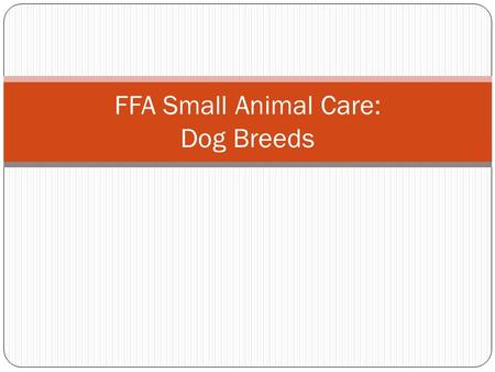 FFA Small Animal Care: Dog Breeds. Weimaraner.
