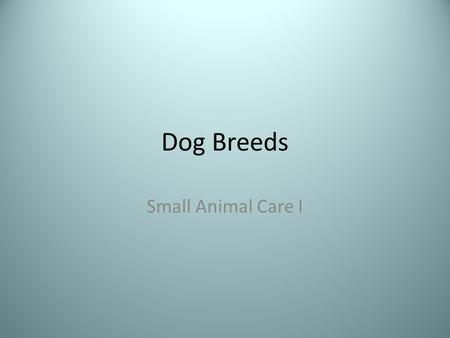 Dog Breeds Small Animal Care I. German Shepherd St. Bernard.