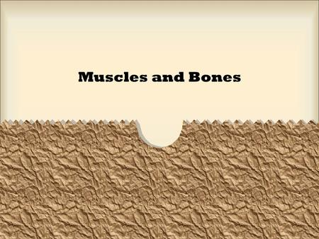 Muscles and Bones. Muscles consist of groups of bundles of muscle fibers Bundles of muscle fibers contain several muscle cells that span the length of.