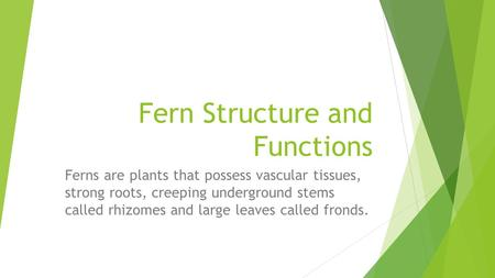 Fern Structure and Functions