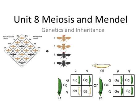 Unit 8 Meiosis and Mendel Genetics and Inheritance.
