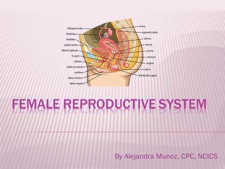 By Alejandra Munoz, CPC, NCICS.  Intersex Surgery, only 2 codes within subsection  Male to female  Female to male Complicated procedures completed.