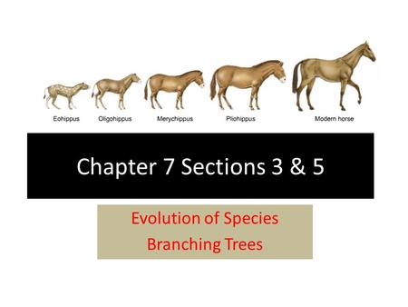 Chapter 7 Sections 3 & 5 Evolution of Species Branching Trees.