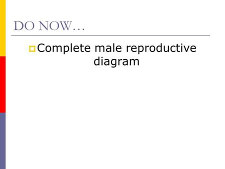 DO NOW…  Complete male reproductive diagram. Female Reproductive System.