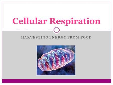 HARVESTING ENERGY FROM FOOD Cellular Respiration.
