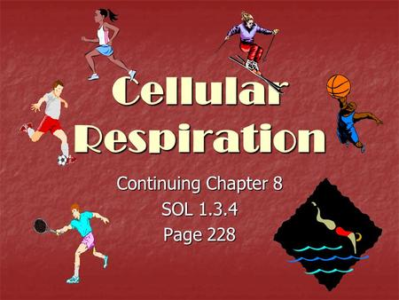 Cellular Respiration Continuing Chapter 8 SOL 1.3.4 Page 228.