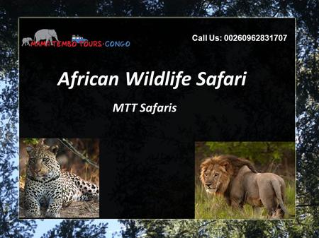 African Wildlife Safari MTT Safaris Call Us: 00260962831707.
