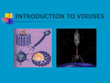 INTRODUCTION TO VIRUSES. Why Study Viruses? Not so good side of viruses  Infect all life forms Useful for  Phage typing of Salmonella  Source of RT,