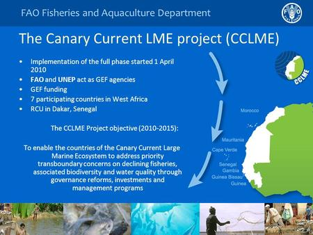 FAO Fisheries and Aquaculture Department The Canary Current LME project (CCLME) Implementation of the full phase started 1 April 2010 FAO and UNEP act.