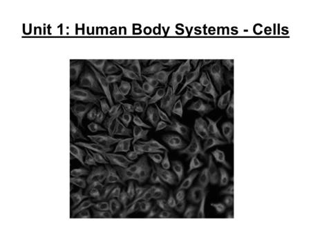 Unit 1: Human Body Systems - Cells. Cells are important to study because… They are the _____________________ They are the ________________ of all living.