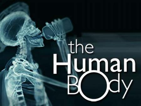 The Human Body. 10 Systems of the Body Skeletal Muscular Nervous Circulatory Respiratory Immune Digestive Urinary Hormonal Reproductive.