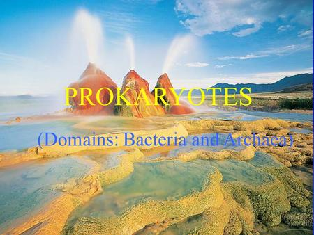 PROKARYOTES (Domains: Bacteria and Archaea). Prokaryotes  They are not Plants, included because: Tradition Comparative studies: e.g. photosynthesis Cause.
