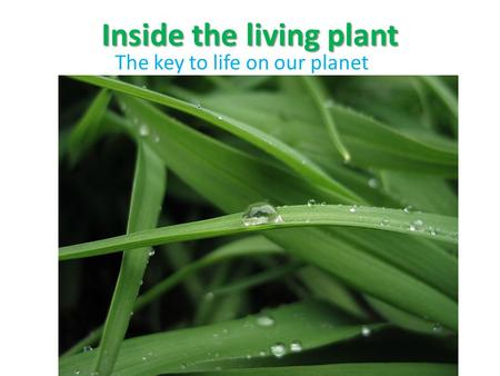Inside the living plant The key to life on our planet.