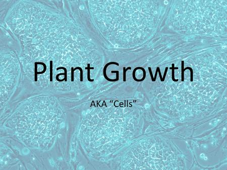 "Plant Growth AKA ""Cells"". The Cell Membrane The cell membrane or (plasma membrane) is a flexible boundary between the cell and its environment – It is."