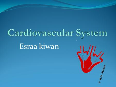 Esraa kiwan. Cardiac Output Cardiac Output: is the volume of blood pumped by each ventricle per minute.