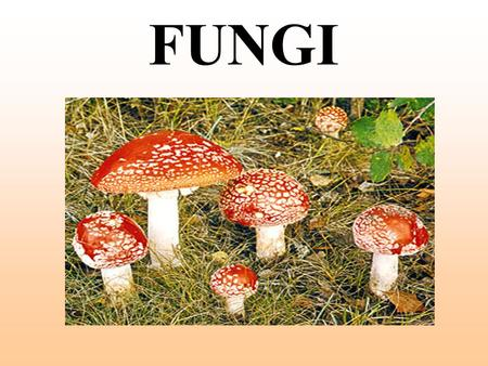 FUNGI. Fungi Kingdom Eukaryotes. Use spores to reproduce. Heterotrophs cannot make their own food. Need warm, moist places to grow. Examples: yeast, molds.