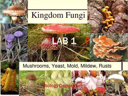 Biology Department 1.  Identification of Fungal characteristic, Shape & reproduction 2.