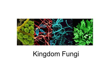 Kingdom Fungi. Fungus = an organism in the kingdom Fungi which obtains food by breaking down other substances in the surroundings and absorbing the nutrients.