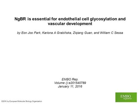 NgBR is essential for endothelial cell glycosylation and vascular development by Eon Joo Park, Kariona A Grabińska, Ziqiang Guan, and William C Sessa EMBO.