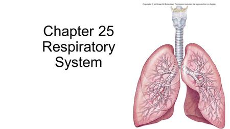 Chapter 25 Respiratory System. Fig. 25.1 Upper respiratory tract Lower respiratory tract Sphenoidal sinus Frontal sinus Nasal cavity Pharynx Larynx Trachea.