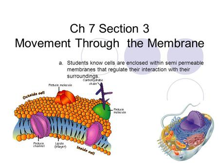 Ch 7 Section 3 Movement Through the Membrane a.Students know cells are enclosed within semi permeable membranes that regulate their interaction with their.