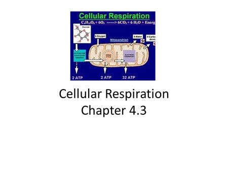 Cellular Respiration Chapter 4.3. KEY CONCEPT Cellular respiration is an aerobic process with two main stages.
