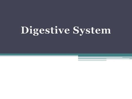 The digestive system consists of a muscular tube, the digestive tract, also called GI tract or alimentary canal and various accessory organs.