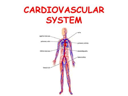 CARDIOVASCULAR SYSTEM. Questions? What are the structures that make up the cardiovascular system? What are the functions of the cardiovascular system?
