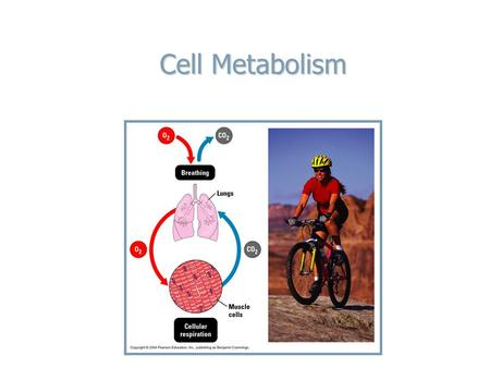 Cell Metabolism. BIG PICTURE BIG PICTURE The sun provides the energy that powers all life The sun provides the energy that powers all life Animals depend.