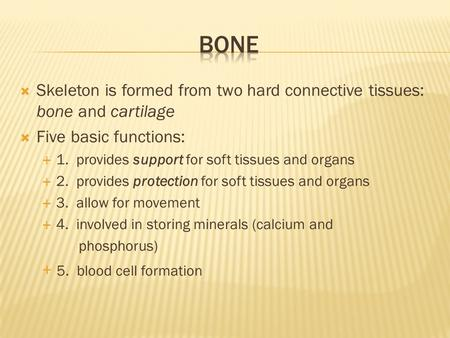  Skeleton is formed from two hard connective tissues: bone and cartilage  Five basic functions:  1. provides support for soft tissues and organs  2.